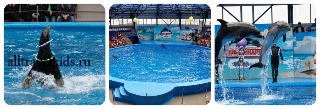 Сочи Парк и его дельфинарий