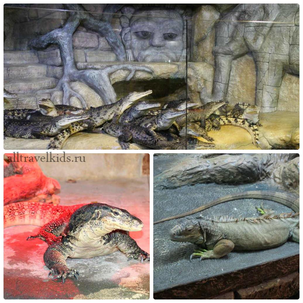 Крокодиловая ферма ялта крым