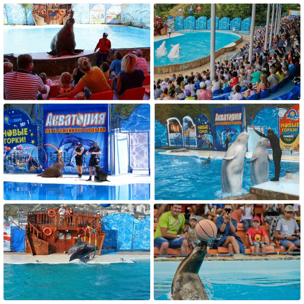 акватория дильфинарий театр морских животных
