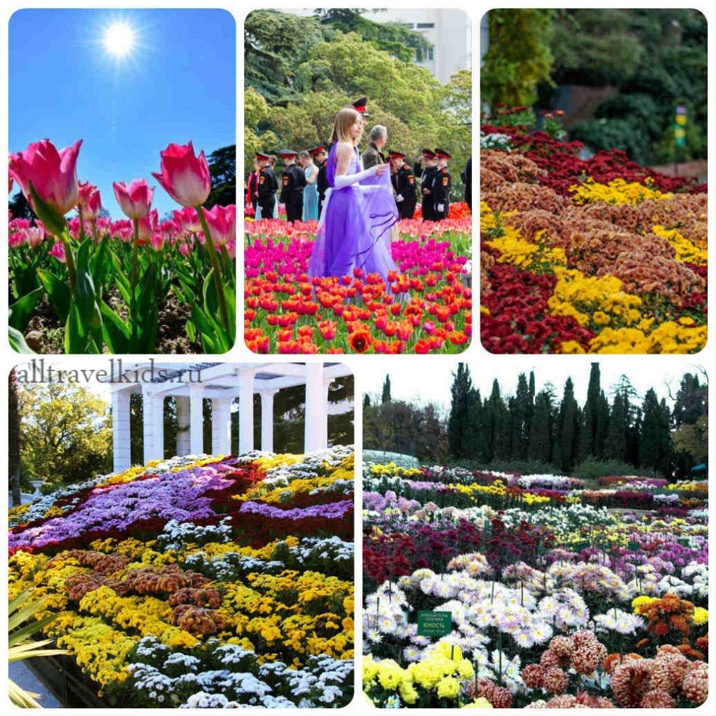 Бал хризантем и тюльпанов