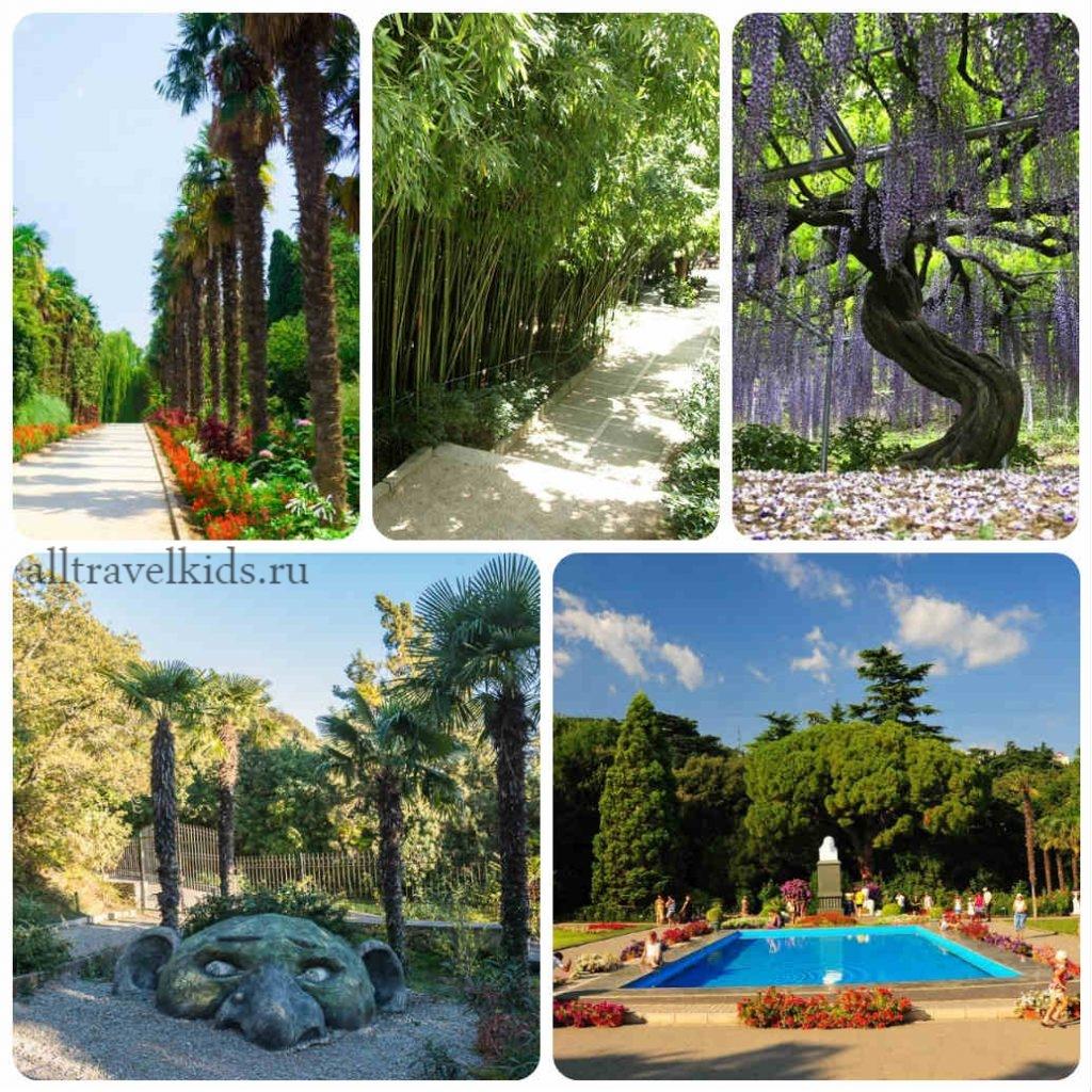 Структура Никитского ботанического сада